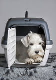 Puppy sitting in his transporter pet carrier Stock Photos