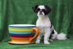 Puppy sitting by huge mug Royalty Free Stock Photos