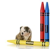 Puppy sitting with large crayons Royalty Free Stock Photo
