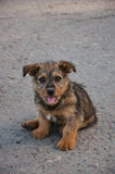 Puppy sitting on the road Royalty Free Stock Image