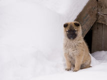 Puppy. A puppy sitting on snow Royalty Free Stock Photography