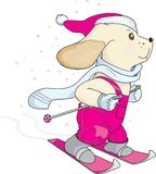 Puppy skiing Stock Images