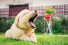 Puppy sleep on the grass. Puppy sleep on the grass with copy-space on the right Royalty Free Stock Photo