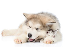 Puppy sleep with tiny kitten. isolated on white background.  Stock Images