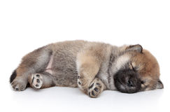 Puppy sleep on white background Royalty Free Stock Photo
