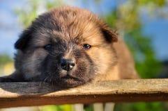 Puppy sleep. The puppy sleep on wood Stock Images