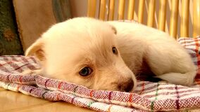 Puppy sleeping on blanket