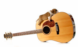 Puppy sleeping on a guitar royalty free stock image