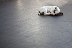 Puppy sleeping Royalty Free Stock Images