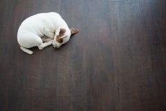 Puppy sleeping Royalty Free Stock Photos