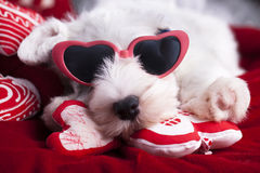 Puppy sleeps  on a pillow in the shape of heart Royalty Free Stock Photography