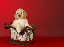 Puppy in sleigh Stock Photos