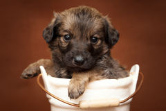 Puppy in small pail Stock Images