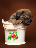 Puppy in small pail Stock Photos