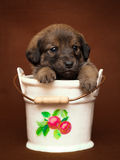 Puppy in small pail Royalty Free Stock Photography