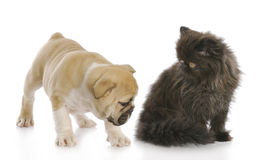 Puppy sniffing kittens backside Royalty Free Stock Photography