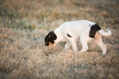 Puppy sniffing in yard