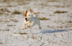 Puppy in the snow Stock Photography