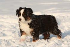 Puppy in snow Stock Photos
