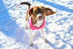 Puppy in the snow stock photos