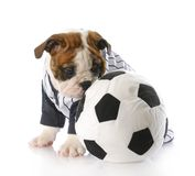 Puppy with soccer ball Royalty Free Stock Photos