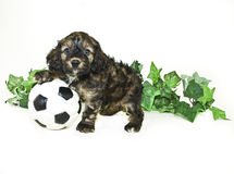 Puppy With Soccer Ball Stock Photos