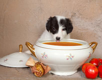 Puppy and soup Stock Photography
