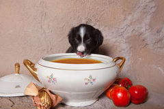Puppy soup lover Royalty Free Stock Photos
