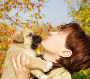 The puppy of Spanish mastiff licks a woman's face Royalty Free Stock Photography