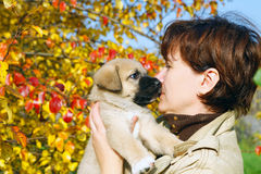 The puppy of the Spanish mastiff licks a woman Royalty Free Stock Image