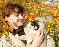 The puppy of the Spanish mastiff's Stock Images