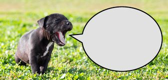 Puppy with speech bubble Stock Photo