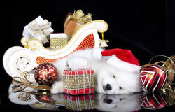 Puppy spitz wearing a santa hat Royalty Free Stock Photos
