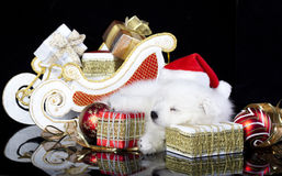 Puppy spitz wearing a santa hat Royalty Free Stock Image