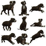 Puppy Staffordshire. 3D Render of an Puppy Staffordshire Stock Photo