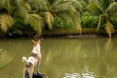 Puppy Standing by Green Pond with Coconut Trees and Tropical Plants stock photos