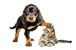 Puppy standing with paw on the head of a cat Stock Photography