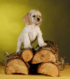 Puppy standing on wood pile Royalty Free Stock Photos