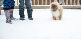 Puppy stands on snow and cold winter time.  Royalty Free Stock Photography