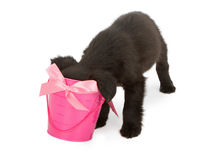 Puppy sticking head in pink bucket Stock Photo