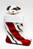Puppy in Stocking Stock Photography