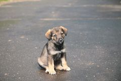 Puppy on street Stock Images