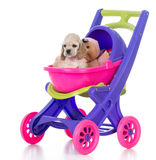 Puppy in a stroller Royalty Free Stock Photography