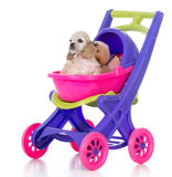 Puppy in a stroller Royalty Free Stock Photos