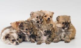 Puppy in studio stock foto