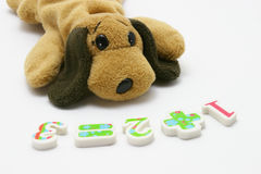 Puppy stuffed toy learning arithmetic Royalty Free Stock Image
