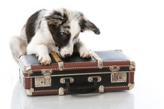 Puppy with suitcase Royalty Free Stock Image