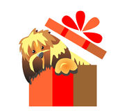 Puppy surprise. Dog in a gift box.  Royalty Free Stock Image