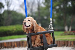 Puppy on a swing Royalty Free Stock Photo