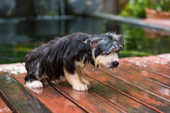 Puppy take a bath royalty free stock photography